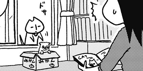 [227回]猫田びより