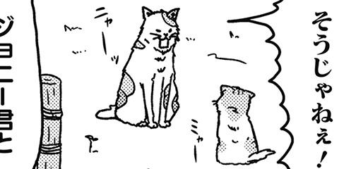[234回]猫田びより