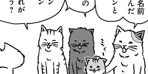 [376回]猫田びより