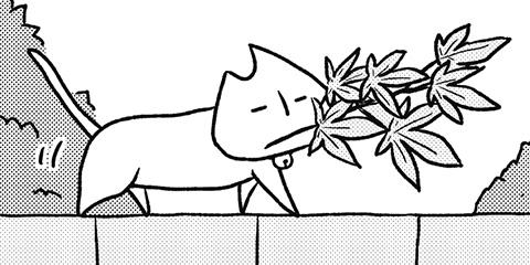 [399回]猫田びより