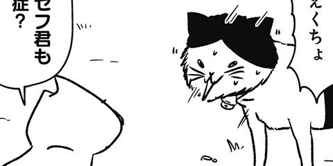 [539回]猫田びより