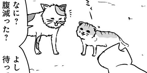 [604回]猫田びより