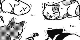 [810回]猫田びより